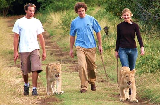 Marcher-avec-les-lions