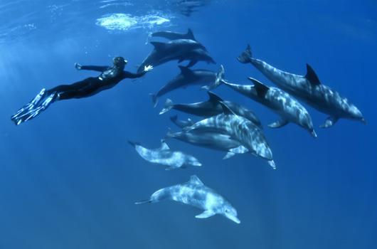 Nager-avec-les-dauphins